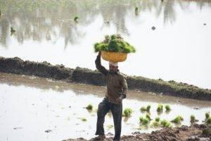 A local farmer - Bangalore Goa Road Trip